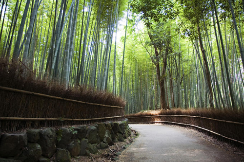 Bamboo forest walkway, Arashiyama district.