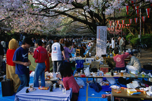 hanami cherry blossom in ueno park tokyo Travel To Tokyo   Top 10 Best Places