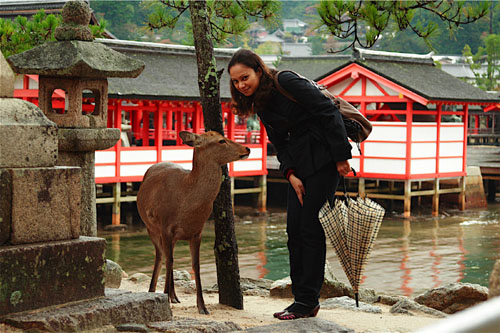 a tourist taking photo with the tame deer at Itsukushima Shrine, Miyajima, Japan
