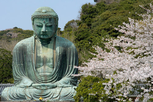 Daibutsu at Kotokuin, Kamakura. The magnificence of the Great Buddha is surrounded by the charm of cherry blossoms