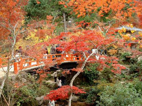 the bounty of autumn foliage in Momijidani Park, Miyajima, Hiroshima Prefecture, Japan