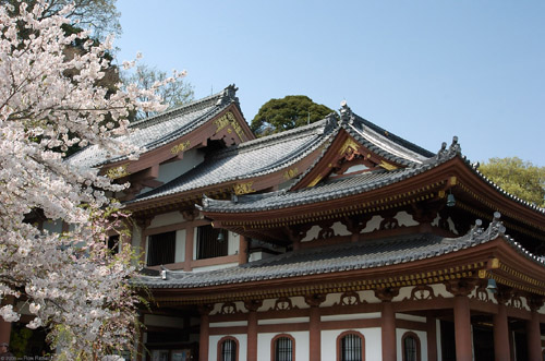 The elegantly architected roof of Kamakura Hasedera Temple