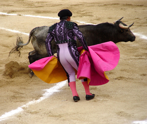 The popular Matador fighting bull in Plaza de Toros (bullfight arena) have all spectators gasp in excitement. It's no kidding at all.