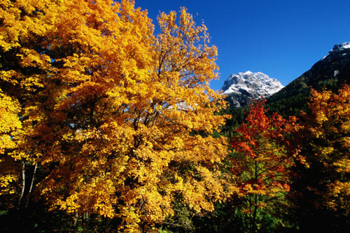 Trees in autumn colours in Switzerland is comparable to the autumn foliage in Japan