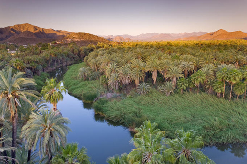 Date Palms (Phoenix dactylifera) and Fan Palms at sunrise, looking over Rio Mulege (Arroyo Santa Rosalia) with Sierra de Guadalupe in distance.
