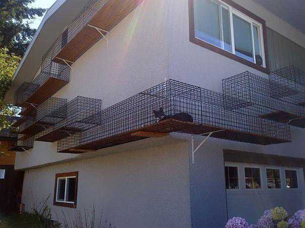 cat cage on wall