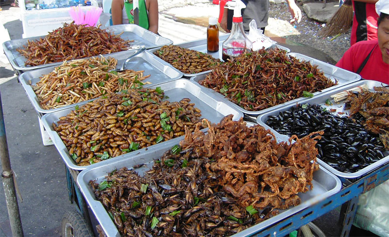 Vietnamese bug food