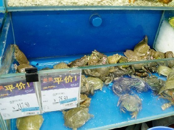 China Walmart frogs